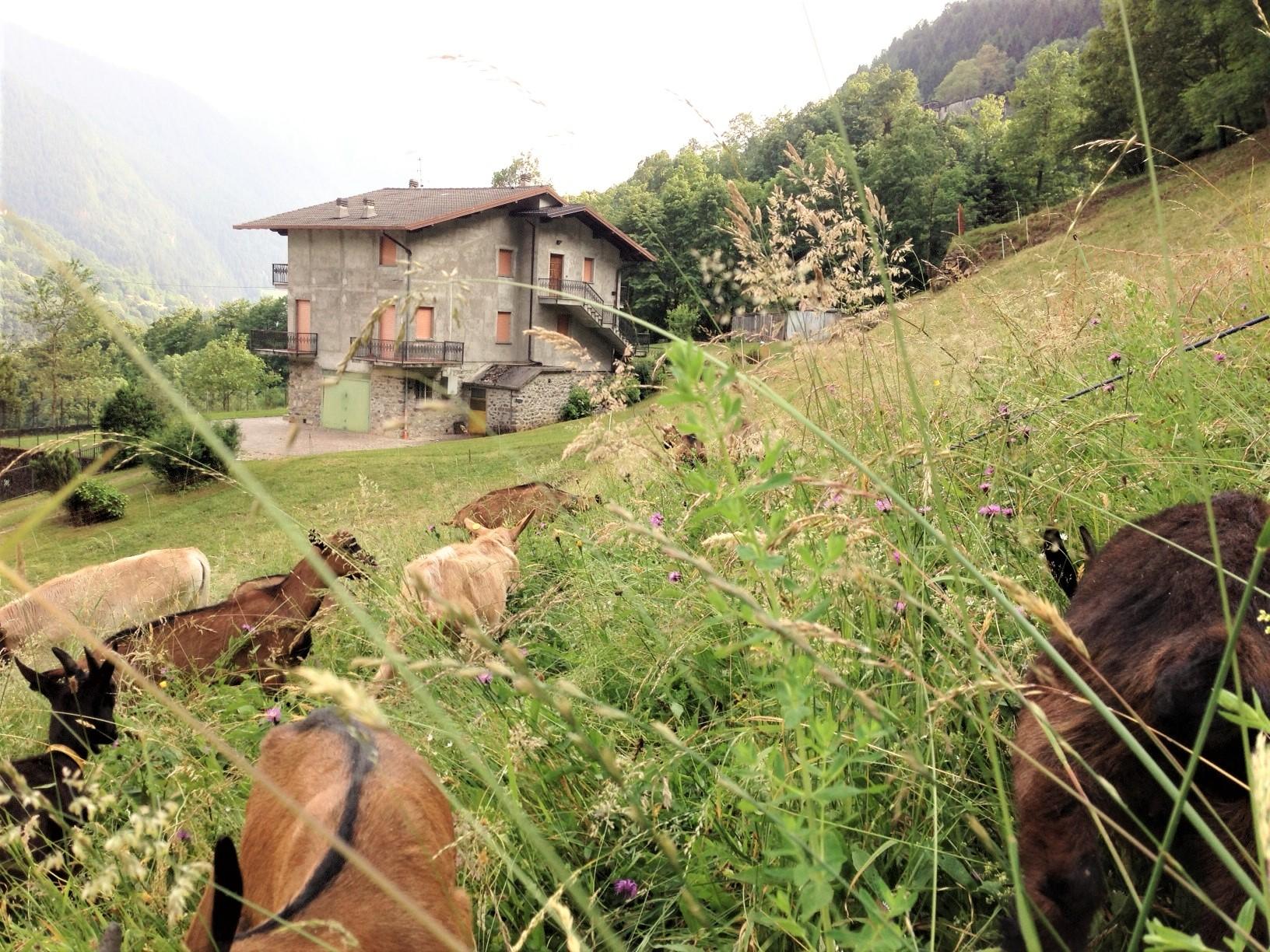 villa bifamiliare circondata da 13.000 mq. prato e bosco di proprietà a gandellino